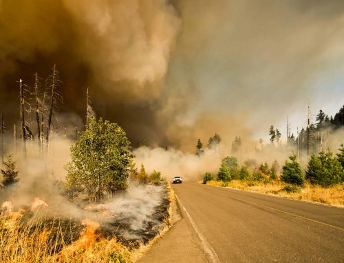 COVID-19 Impact on 2020 Wildfire Season